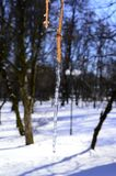 Filial av ett träd i is arkivfoton