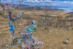 filial av ett träd med band och Baikal royaltyfri fotografi
