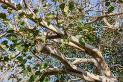 Filial av ett träd mot himlen Fotografering för Bildbyråer