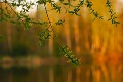 Filial av ett ungt träd på en suddig bakgrundsskogsommar royaltyfri bild