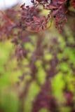 Filial av ett vårträd Arkivfoton