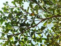 Filial av grön bladbakgrund Arkivbild