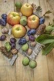Filial av gröna valnötter med äpplen, katrinplommoner och fikonträd Arkivbilder