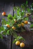 Filial av gula plommoner Arkivbilder