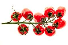 Filial av jussy körsbärsröda tomater Royaltyfria Foton
