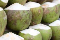 Filial av kokosnöten Arkivfoto