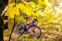 Filial av lönn med gulingsidor på bakgrunden av en bicycl arkivfoto