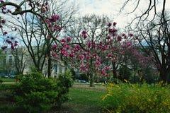 Filial av magnolian royaltyfri fotografi