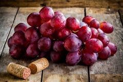 Filial av mogna organiska druvor med korkar för vin royaltyfri bild