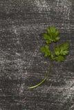Filial av ny koriander på svart bakgrund som är sliten med skrapor arkivfoton