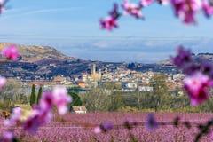 Filial av persikaträdet med härliga rosa blommor och knoppar på förgrund och en sikt av Aitona på bakgrund solig dag Prunus fotografering för bildbyråer