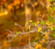 Filial av rosa höfter i höstskogen royaltyfri bild