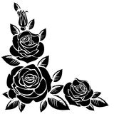 Filial av rosor Arkivbilder