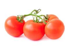 Filial av tomaten Royaltyfria Bilder