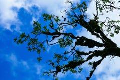 Filial av trädcoverden med mossa med blå himmel fotografering för bildbyråer