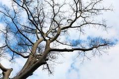 Filial av trädet Arkivbilder