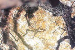 Filial av trädet Royaltyfria Foton