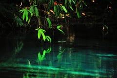 Filial av trädet som begränsar till dammet Arkivfoto