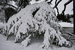 Filial av trädet som täckas av ny vit snö - Leamington Spa, UK - 10 december 2017 Arkivfoton