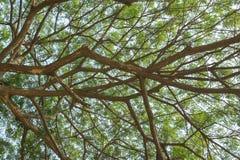 Filial av treen Fotografering för Bildbyråer