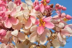 Filial av tropiska blommor royaltyfri fotografi