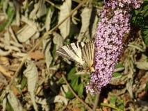Filial av Violet Tiny Flowers på en trädfilial royaltyfria bilder