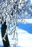 Filial congelada fotografia de stock