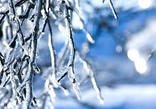 Filial congelada - gelo fotos de stock