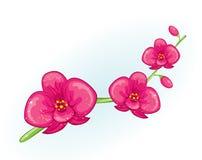 Filial cor-de-rosa da orquídea Foto de Stock
