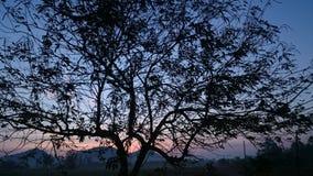 Filial da árvore Fotos de Stock Royalty Free
