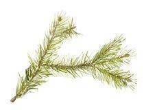 Filial da árvore de abeto Fotografia de Stock Royalty Free
