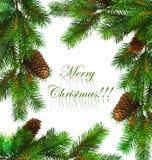 Filial da árvore de Natal Foto de Stock Royalty Free