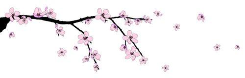 Filial da flor de cereja bonita Fotos de Stock Royalty Free