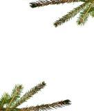 filial da Pele-árvore Imagens de Stock Royalty Free