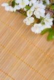 Filial das flores de cereja Fotos de Stock