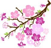 Filial das flores de cereja Foto de Stock Royalty Free