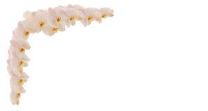 Filial das orquídeas Fotos de Stock