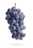 A filial das uvas com gotas da água, isolada Foto de Stock Royalty Free