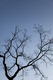 Filial de árvore Imagens de Stock