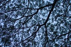Filial de árvore e dela folha Foto de Stock