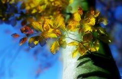 Filial de árvore feericamente Foto de Stock Royalty Free