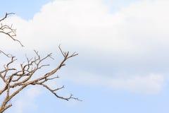Filial de árvore inoperante Imagem de Stock Royalty Free