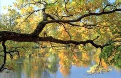 Filial de árvore pitoresca sobre a água fotos de stock