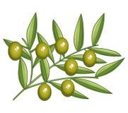 Filial de azeitonas verdes Fotografia de Stock Royalty Free