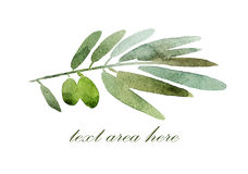 Filial de azeitonas verdes Foto de Stock Royalty Free