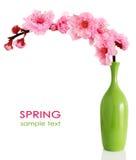 Filial de florescência da cereja da mola no vaso Fotos de Stock Royalty Free