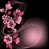 Filial de florescência em um preto Imagem de Stock Royalty Free