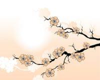 Filial de Sakura ilustração stock