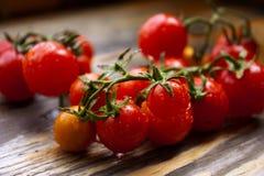 Filial de tomates de cereja maduros Imagens de Stock