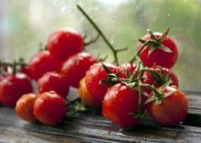 Filial de tomates de cereja maduros Fotografia de Stock